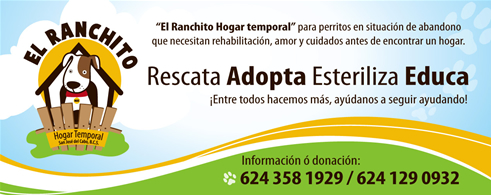 El Ranchito, Hogar Temporal para Perros en Situación de Abandono